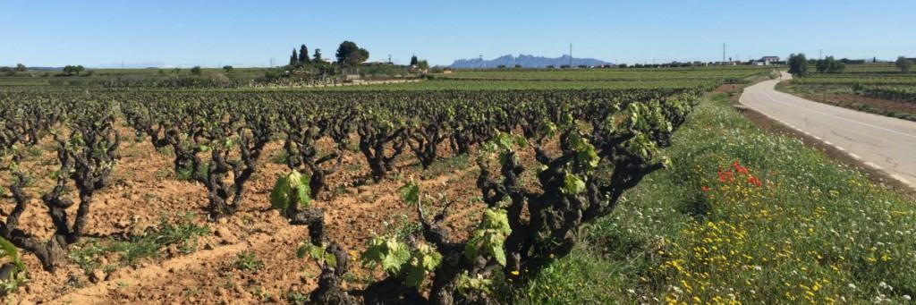 Vacances al Penedès, a prop del mar, Tarragona i Port Aventura