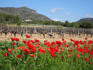 Vistes masia Cal Sagal - Cal Jafra (1)